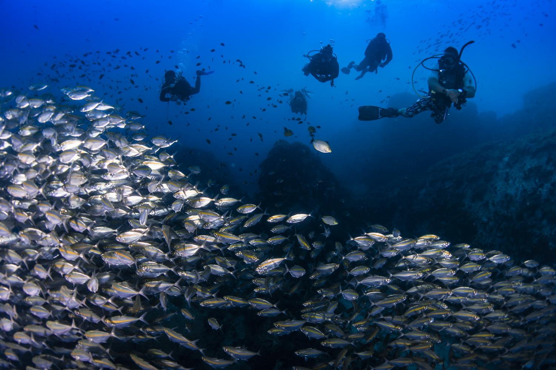 isla-tortuga-divers-koh-tao-DSD-padi