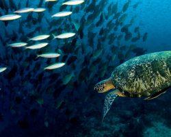 isla-tortuga-diver-koh-tao-fondo-marino