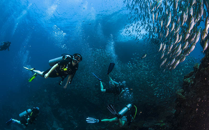 isla-tortuga-divers-koh-tao-mochileros-tailandia-buceo-diving