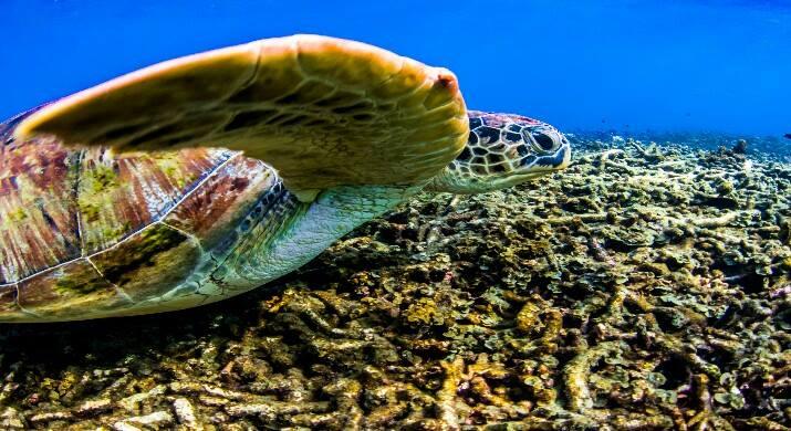 isla-tortuga-divers-koh-tao-cursol-buceo-español (44)