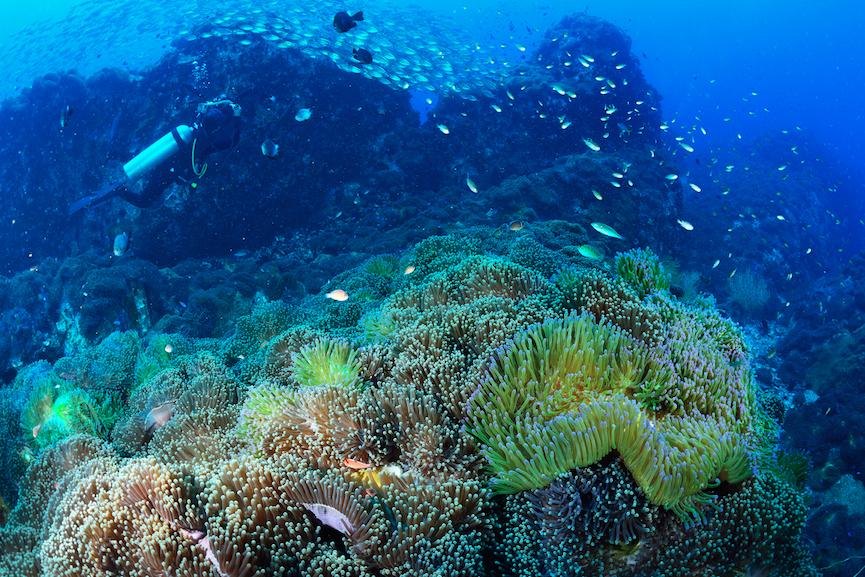 www.islatortugadivers.com-isla-tortuga-divers-koh-tao-SAIL-ROCK-bonito