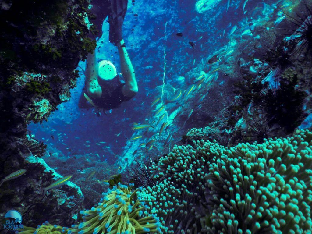 islatortugadivers.com-isla-tortuga-divers-koh-tao-cursos-buceo-español-vista-escuela-javi-piscina-chumphon
