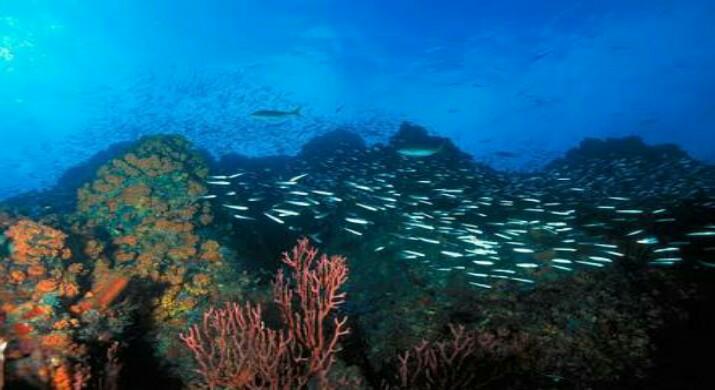 islatortugadivers.com-isla-tortuga-divers-koh-tao-cursos-de-buceo-en-español-formaciones-coralinas