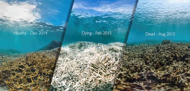 islatortugadivers.com-isla-tortuga-divers-koh-tao-cursos-en-español-corales-bonitos-mundo-muriendo