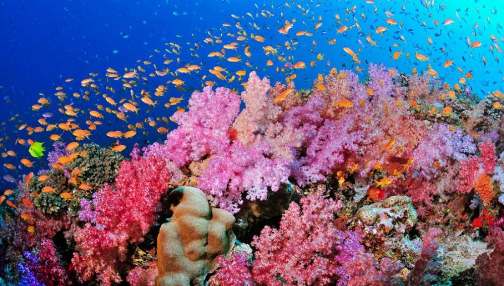islatortugadivers.com-isla-tortuga-divers-koh-tao-cursos-en-español-corales-bonitos