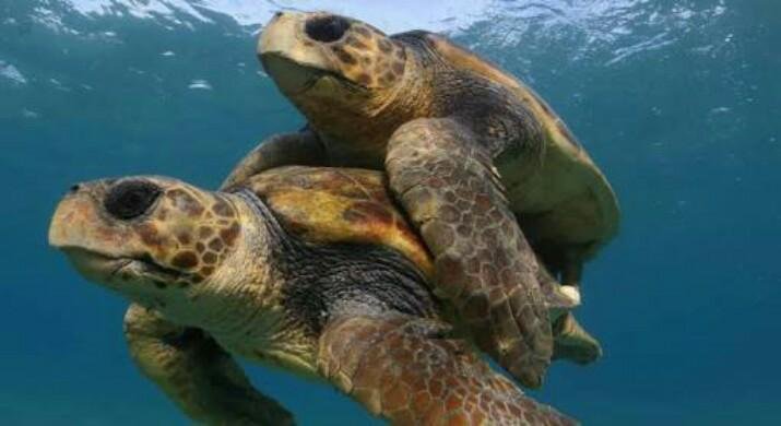 www.islatortugadivers.com-isla-tortuga-divers-koh-tao-cursos-buceo-español-equipo-barco-tortugas