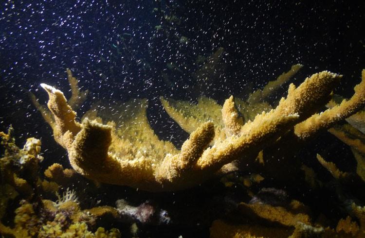 islatortugadivers.com-isla-tortuga-divers-koh-tao-cursos-de-buceo-en-español-luna2