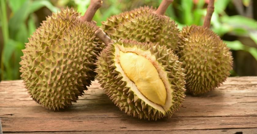 islatortugadivers.com koh tao cursos bueco tailandia padi Durian